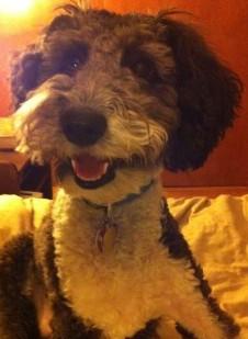 Lola the Dog