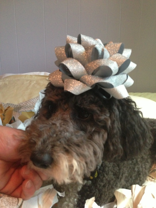 lola the aussiedoodle dog sits with a gift bow on her head