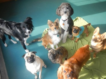 Lola the Dog sits with a group of dogs at doggy daycare