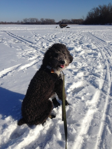 Lola the Dog sits on frozen Lake Wingra with some ice fishing equipment